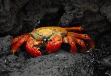 the-best-crabbing-spots-in-ocean-city-nj
